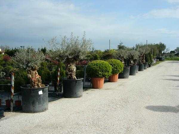 Fiori Jesi.Vivaio Piante E Fiori Jesi Provincia Di Ancona Il Vivaio Garden