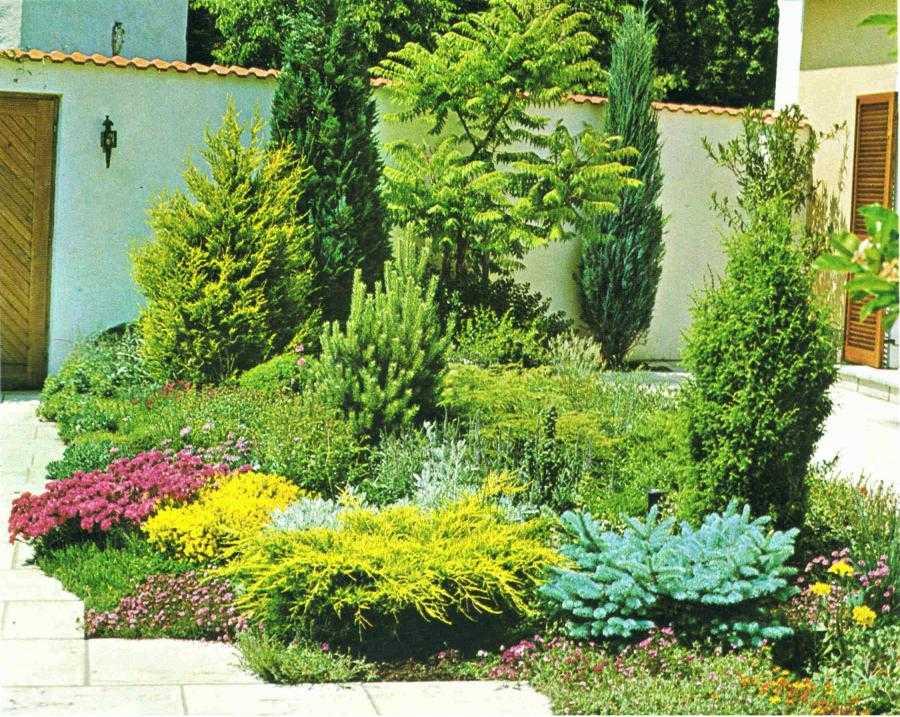 Piante da esterno ornamentali jesi il vivaio garden europa for Piante da vivaio